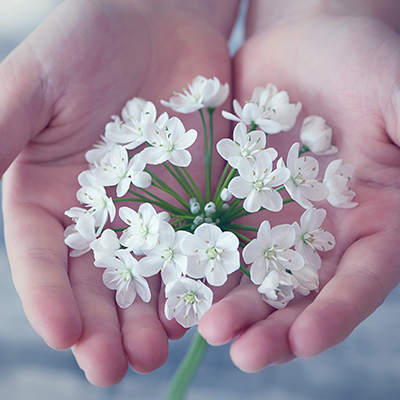 Person holding small white flowers